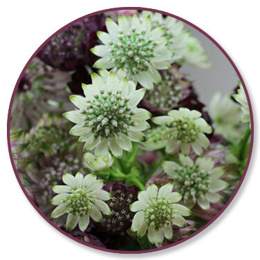 fleursfraiches-fleurssechees-fleuriste-annecy