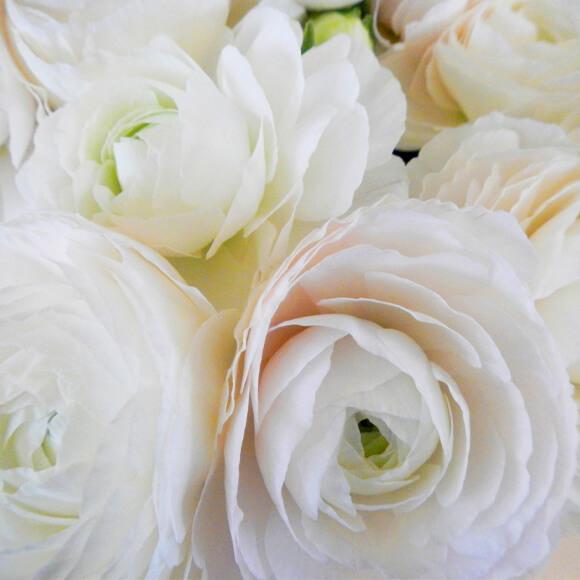 fleur-fraiche-2-astrantia-annecy