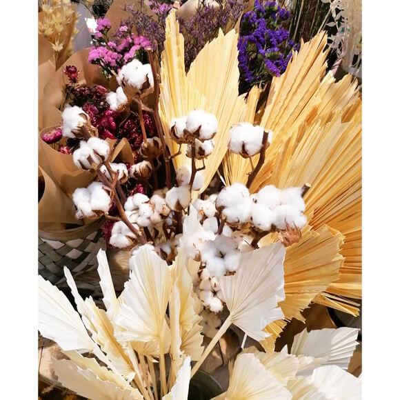 fleur-sechee-3-astrantia-annecy