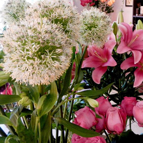 fleur-fraiche-3-astrantia-annecy