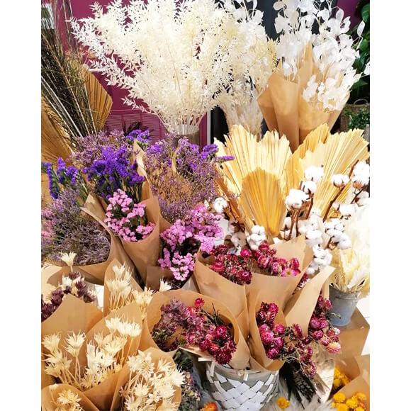 fleur-sechee-5-astrantia-annecy