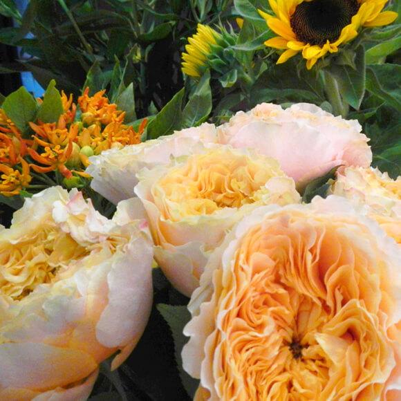 fleur-fraiche-5-astrantia-annecy